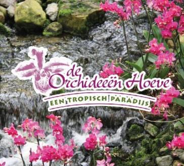 Orchideeën Hoeve Luttelgeest